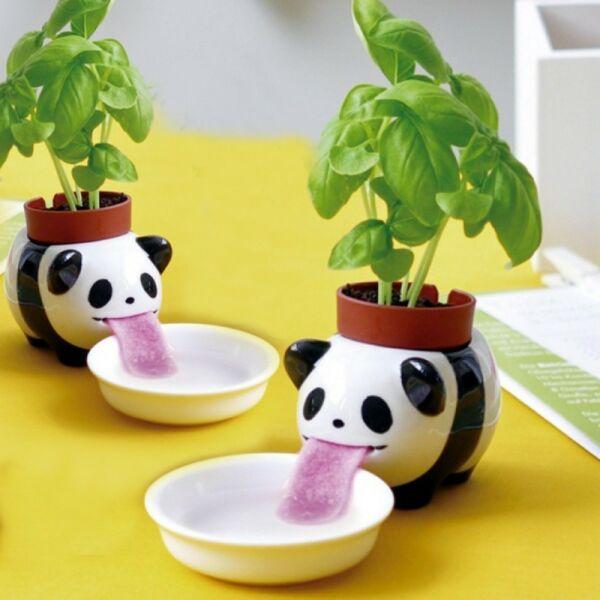 Lefetyelő Panda Kaspó - édes bazsalikom