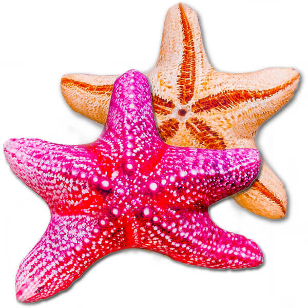 Tengeri Csillag Párna